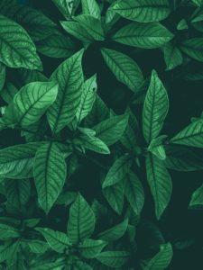 spazio-verde